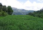 Sistemas de Lagunagem e FitoETARs - Ecologia, Concepção e Dimensionamento