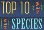 Top 10 New Species for 2014